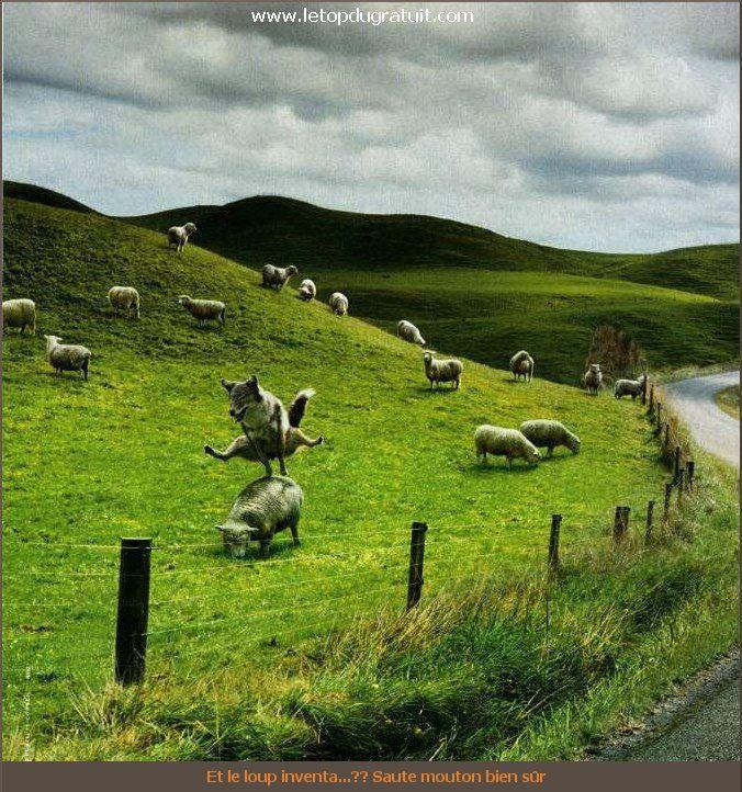 humour-animaux-0005
