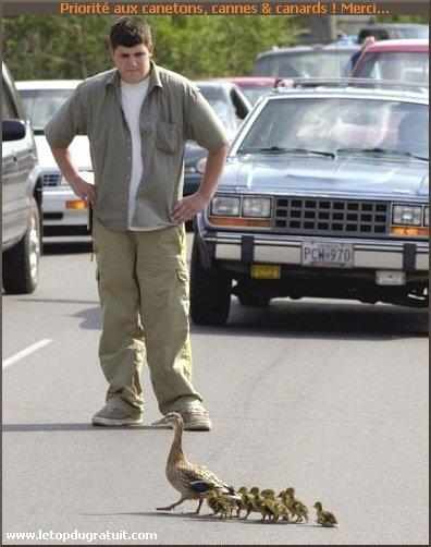 تعلموا قوانين المرور Humour-animaux-0012