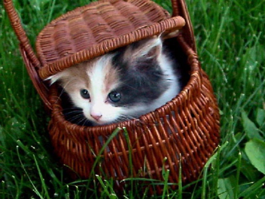http://divertissements.letopdugratuit.com/wallpapers/img/Chats/animaux-chats-0030.jpg